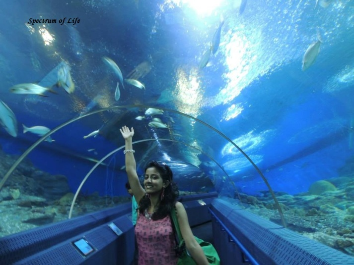 Thats Me in Underwater World