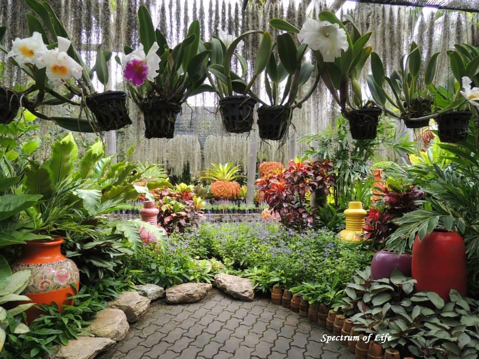 Orchid Graden in Pattaya