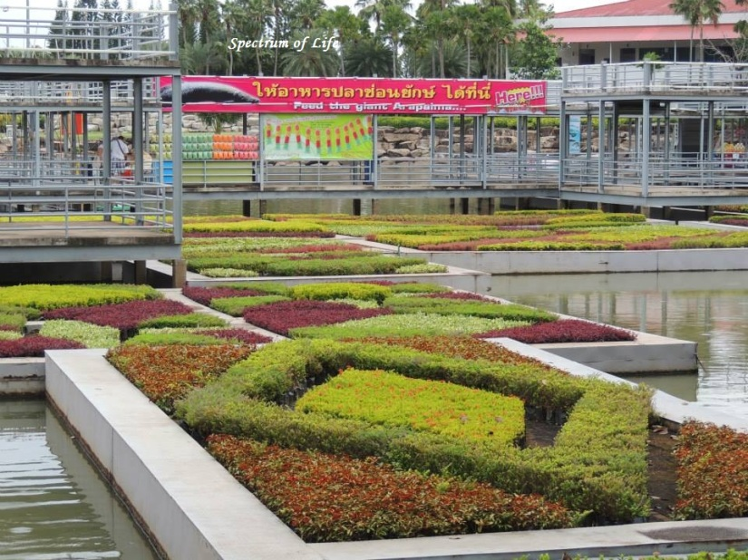 The Gardens of Nong Nooch