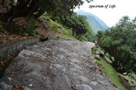 From Chopta to Tungnath