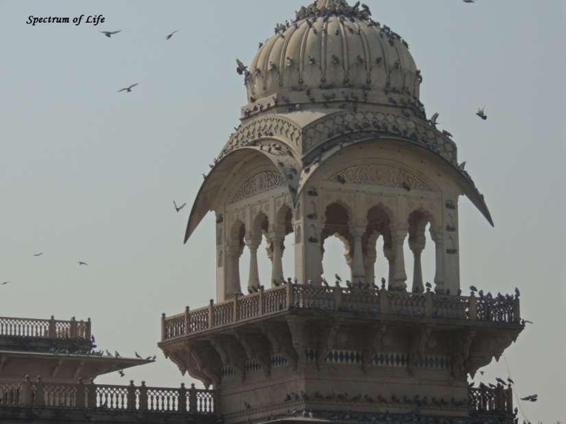 Pigeons galore on top of a Dome