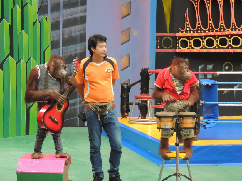Orang Utan show....awesome performance it was