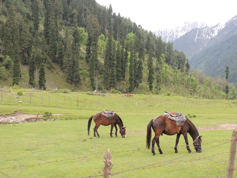 Aru valley with horses grazing around